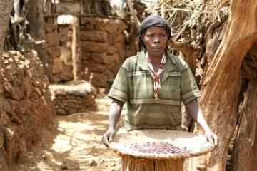 Äthiopien - Reisen - Maisernte