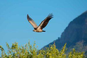 Südafrika - Reisen - Sandveld Nature Reserve