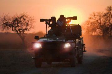 Limpopo-Wildtierbeobachtung mit natuerlich.reisen