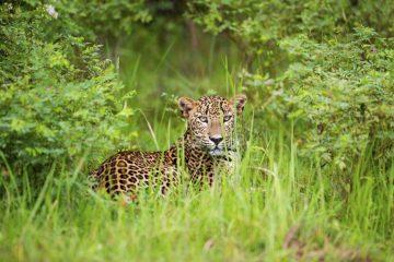 Safari Reisen Sri Lanka - Yala