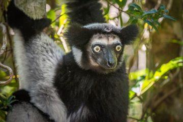 Madagaskar Sehenswürdigkeiten - Andasibe-Mantadia National Park