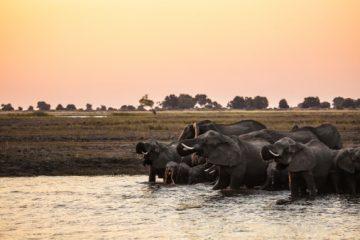 Optimale Reisezeit für Simbabwe Safaris