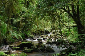 Madagaskar Sehenswürdigkkeiten - Nationalpark Ranomafana Madagaskar