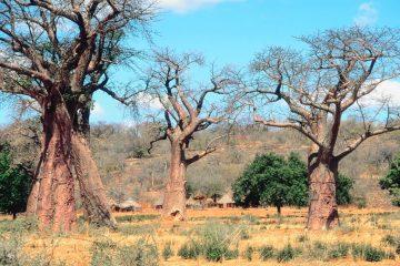 Simbabwe - Zambezi Nationalpark