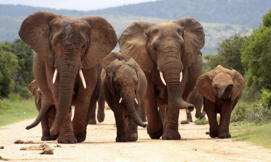 Urlaub im August - Südafrika - Reise - Elefant - Safaris