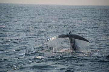 Whale Watching Sri Lanka - Rundreise