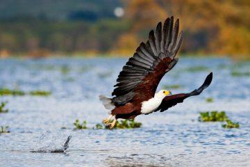 Vogelbeobachtung in Kenia