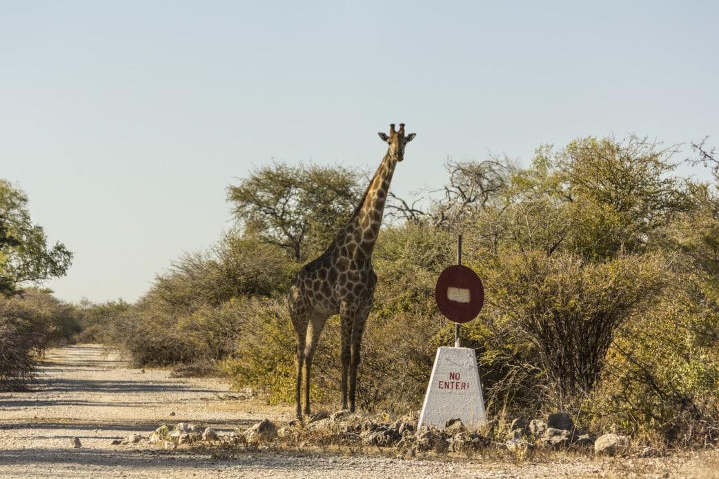 Selbstfahrerreise Namibia