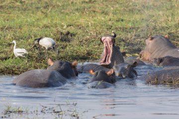 Botswana Safari im August