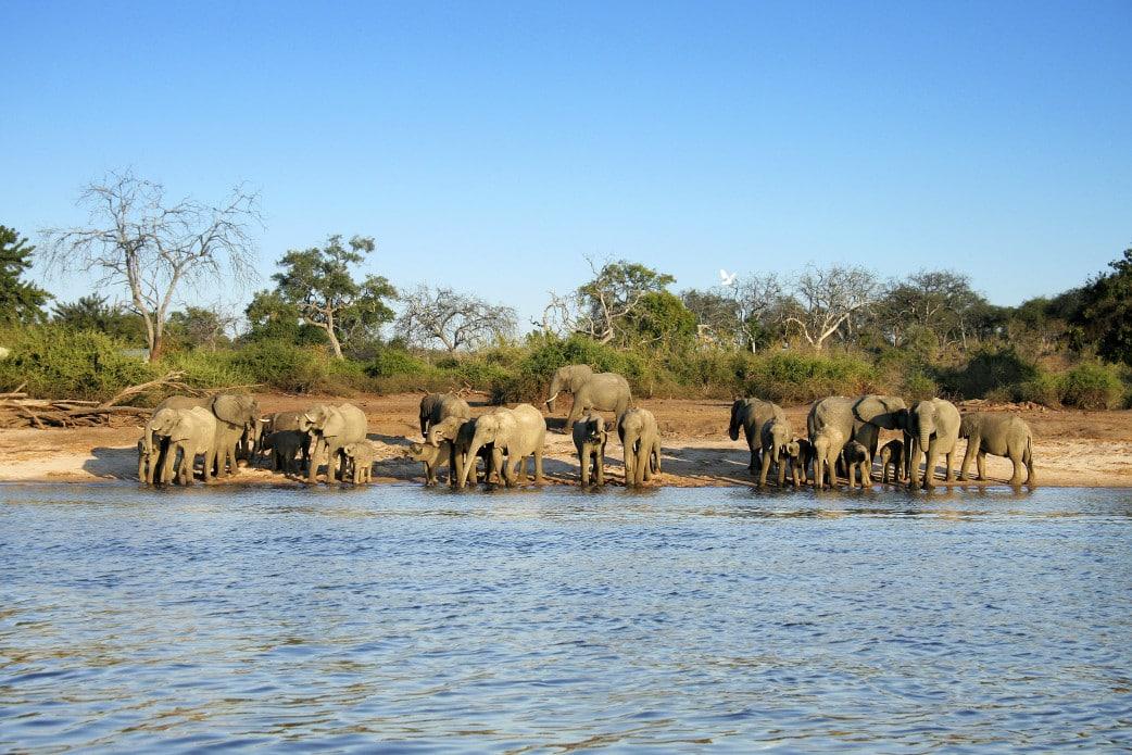 Botswana Safari im Juli