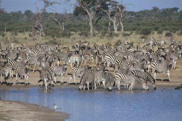 Botswana Safari im Juni