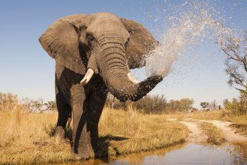 Botswana Safari im April