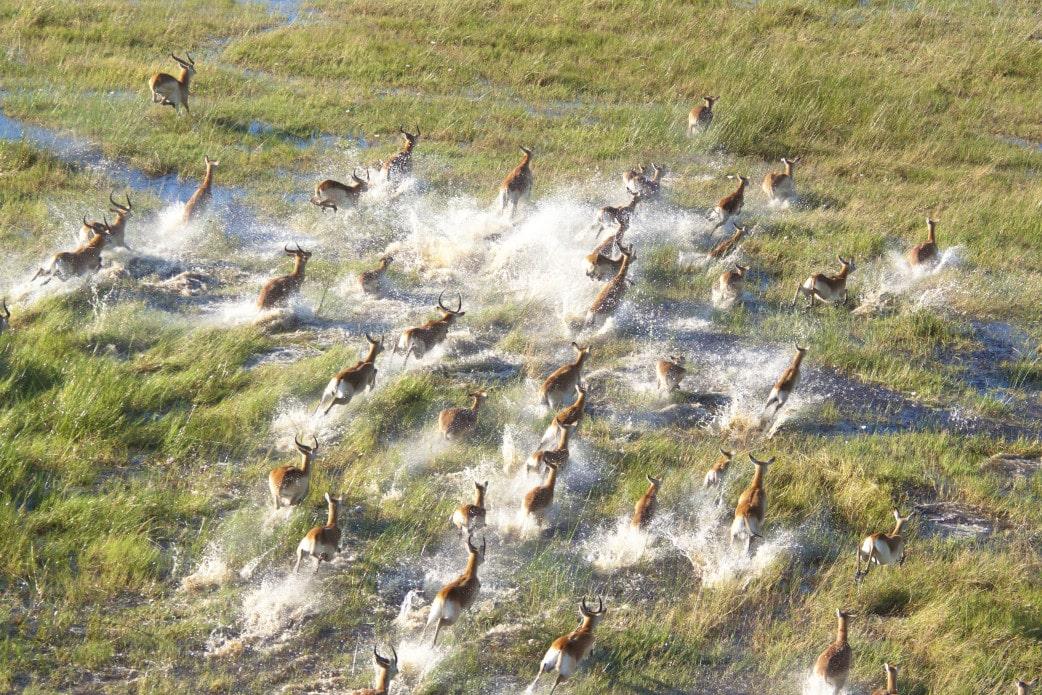 Botswana Safari im September
