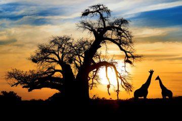 Botswana Safari im Dezember