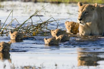 Botswana Gruppen Safari im November