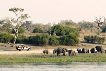 Botswana Safari-Urlaub im Oktober