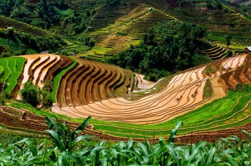 Landschaft von Vietnam