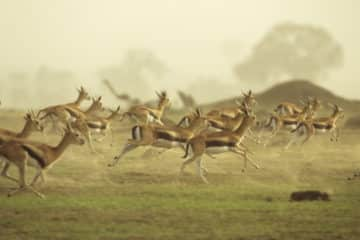 im Juni Suedafrika Safari