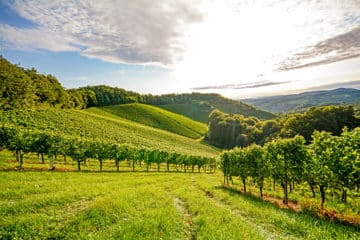 Genussreise in das Weinanbaugebiet Champagne