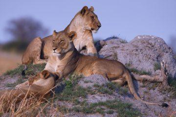 Südafrika Safari im August Big Five