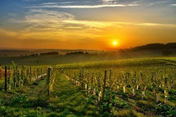 kulinarische Frankreichreise nach Sud-Ouest