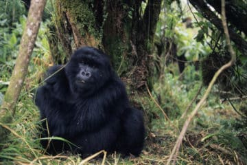 Individua- und Gruppenreise durch Ruanda
