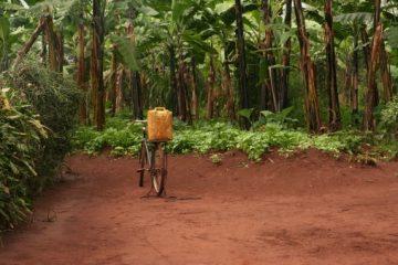 Wanderurlaub in Ruanda im Juli
