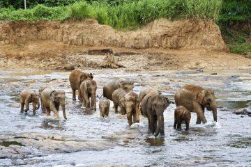 Sri Lanka Reisen im November