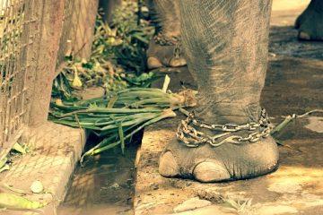 Tiertourismus in Thailand