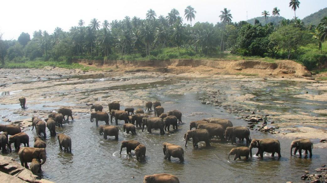 Reisebericht Sri lanka rundreise sri lanka elefanten