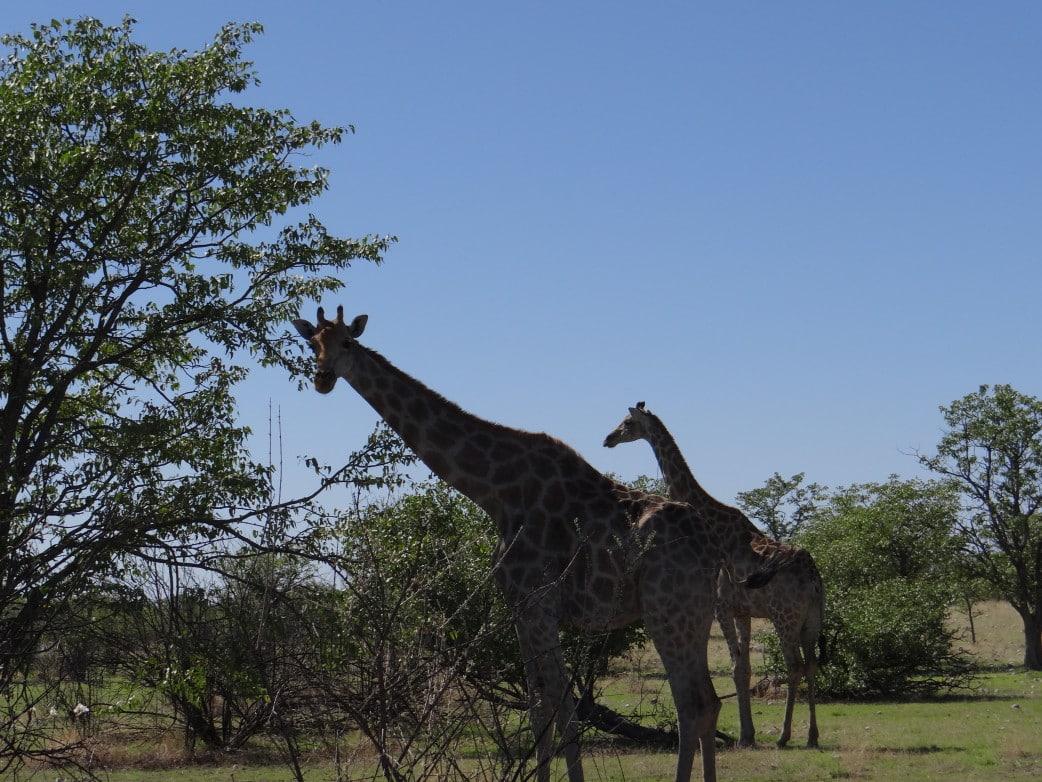 alleine durch namibia als frau