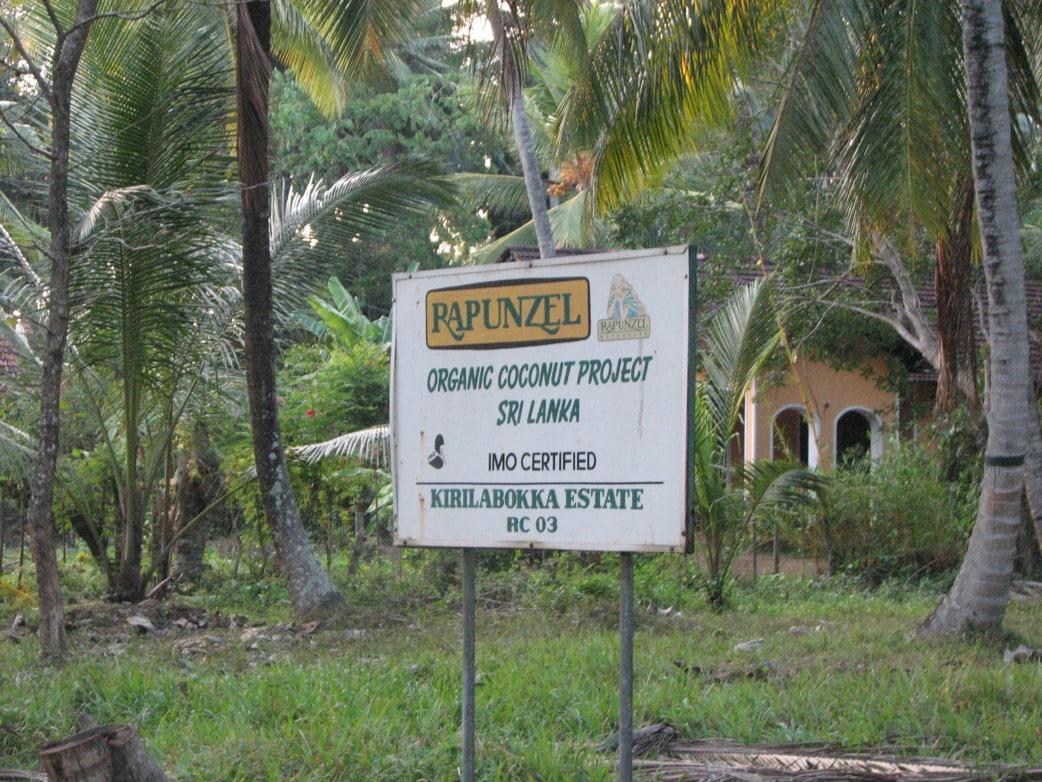 sri lanka rundreise reisebericht kokosplantagen
