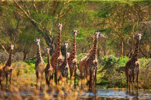 familien safari