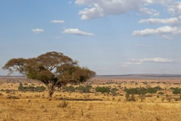 tansania juli august