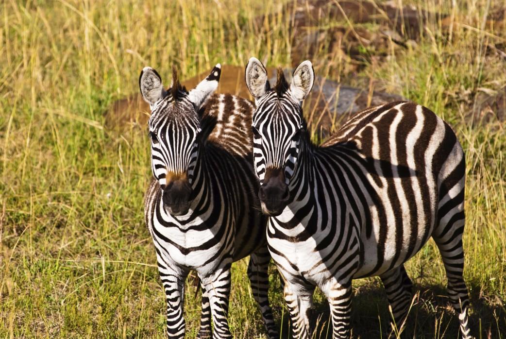 Gnumigration Kenia Tansania