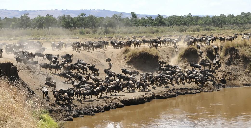 Große Tierwanderung Kenia Tansania