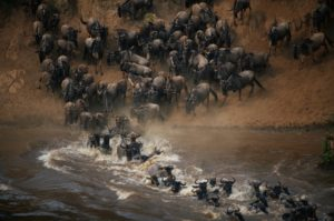 Tierwanderung Kenia Tansania