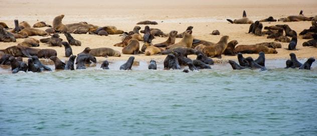 Walvis Bay mit Robben
