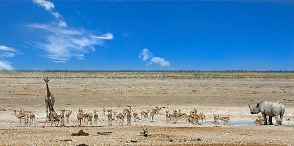 Wasserloch mit Tieren im Etosha Nationalpark