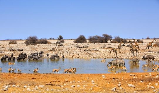 viele Tiere an einem Wasserloch