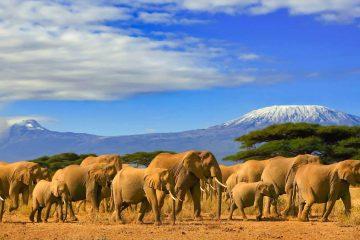 Afrika Safari Rundreisen