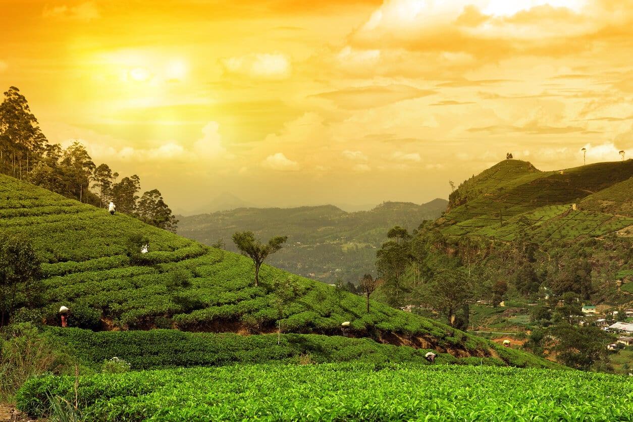 Sri Lanka Rundreisen