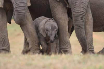 Suedafrika Erlebnisreise - Addo Elephant Park - Garden Route - Suedafrika