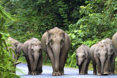 Thailand Individuell -Asiatische Elefanten - Khao Lak National Park - Thailand