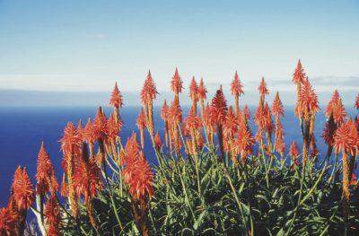 Aussicht -Madeira - Portugal