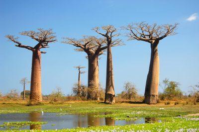 Madagaskar Gruppenreise -Baobabs - Westkueste - Madagaskar