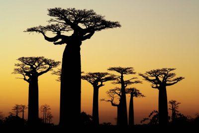 Madagaskar Gruppenreise -Baobabs Sonnenuntergang - Madagaskar