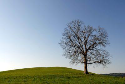 Baum - Mieminger Sonnenplateau - Oesterreich
