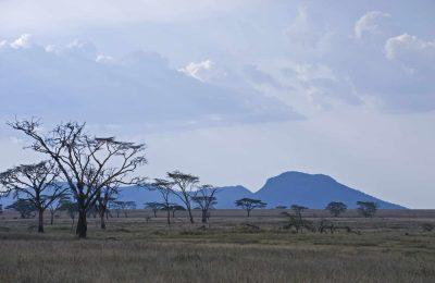 Dämmerung - Serengeti National Park - Tansania