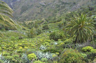 Dschungel - La Gomera - Spanien